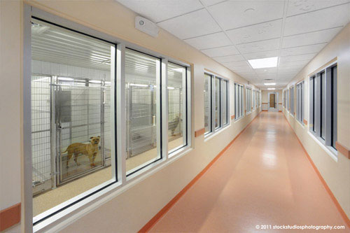 Saratoga County Animal Shelter Architecture Project By C T
